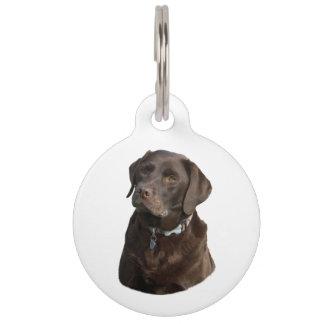 Retrato de la foto del perro de Labrador del Placas De Mascota