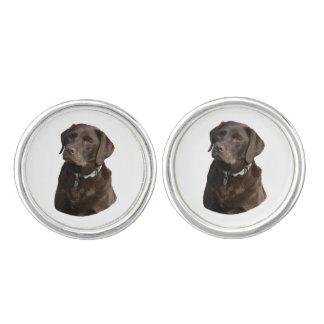 Retrato de la foto del perro de Labrador del Gemelos