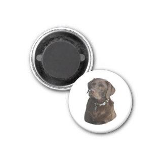 Retrato de la foto del perro de Labrador del Imán Redondo 3 Cm
