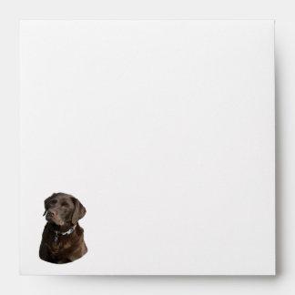 Retrato de la foto del perro de Labrador del Sobres