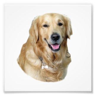 Retrato de la foto del perro del golden retriever fotografía