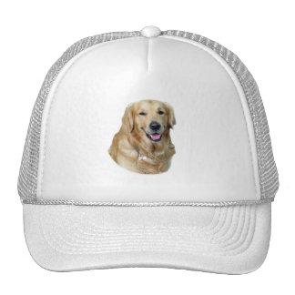 Retrato de la foto del perro del golden retriever gorra