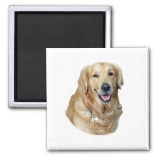 Retrato de la foto del perro del golden retriever imán cuadrado