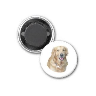 Retrato de la foto del perro del golden retriever imán redondo 3 cm