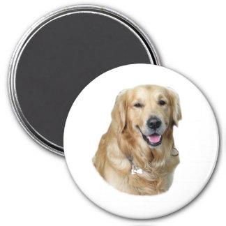 Retrato de la foto del perro del golden retriever imán redondo 7 cm