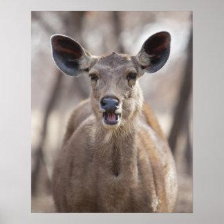 Retrato de la gama de los ciervos del Sambar (Rusa Póster