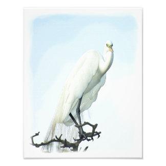 Retrato de la garza de gran blanco arte fotografico
