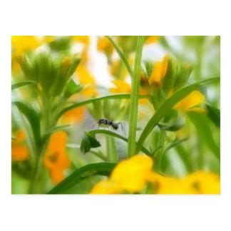 Retrato de la hormiga con los Wallflowers Postales