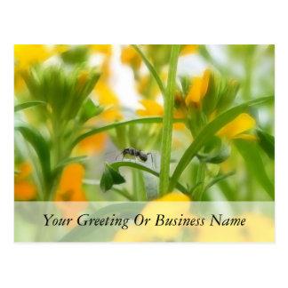 Retrato de la hormiga con los Wallflowers Tarjeta Postal