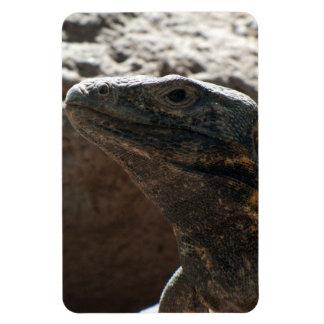 Retrato de la iguana imán
