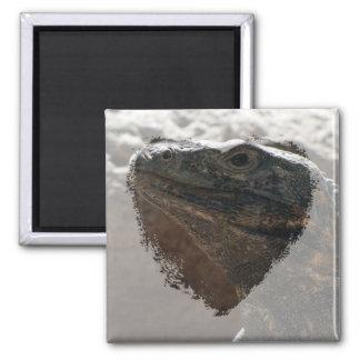Retrato de la iguana imán cuadrado