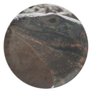 Retrato de la iguana plato de cena