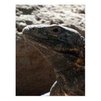 Retrato de la iguana tarjeta postal