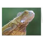 Retrato de la iguana tarjeton