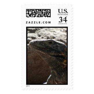 Retrato de la iguana timbres postales