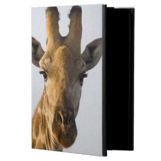 Retrato de la jirafa (camelopardalis del Giraffa)