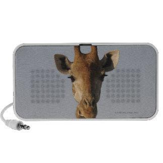Retrato de la jirafa (camelopardalis del Giraffa) iPod Altavoz