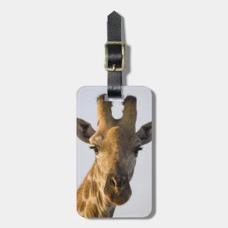 Retrato de la jirafa (camelopardalis del Giraffa) Etiquetas Maletas