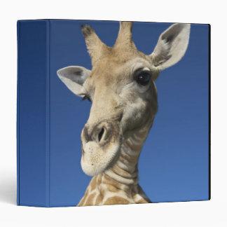 Retrato de la jirafa (Giraffa Camelopardalis)