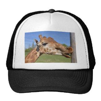 Retrato de la jirafa gorro