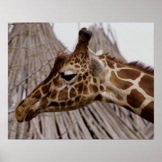 Retrato de la jirafa poster