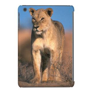 Retrato de la leona (Panthera Leo) Fundas De iPad Mini Retina