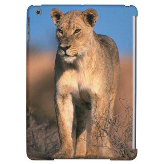 Retrato de la leona (Panthera Leo)