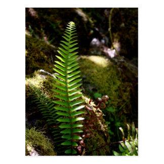 Retrato de la naturaleza del bosque de Oregon - Postal