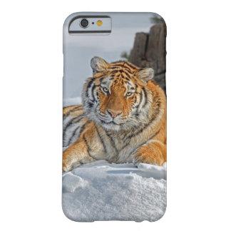 Retrato de la nieve del tigre