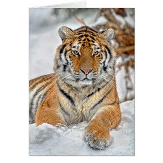 Retrato de la nieve del tigre tarjeta de felicitación