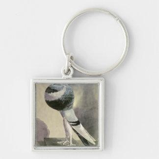 Retrato de la paloma del Pouter Llaveros Personalizados