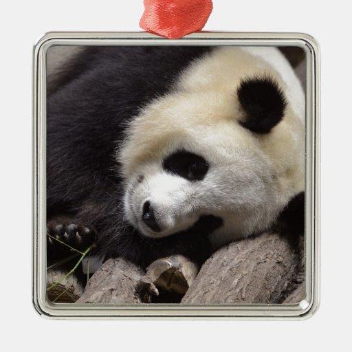 Retrato de la panda gigante adorno para reyes