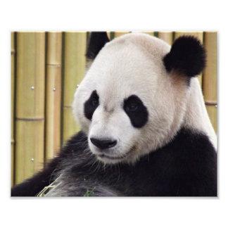 Retrato de la panda gigante arte con fotos
