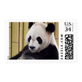 Retrato de la panda gigante sello