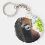 Retrato de la panda roja llaveros