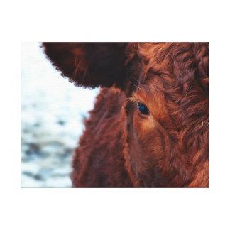 Retrato de la vaca de Brown Lienzo Envuelto Para Galerías