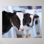 Retrato de la vaca poster