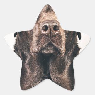 Retrato de Labrador del chocolate Pegatina En Forma De Estrella