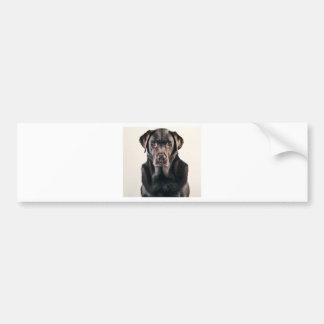 Retrato de Labrador del chocolate Pegatina Para Auto