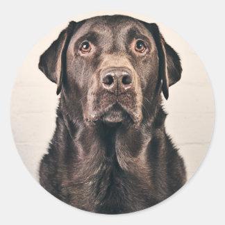 Retrato de Labrador del chocolate Pegatina Redonda