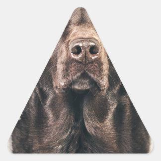 Retrato de Labrador del chocolate Pegatina Triangular