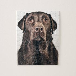 Retrato de Labrador del chocolate Rompecabezas