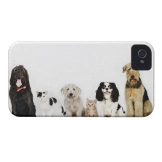 Retrato de los gatos y de los perros que se iPhone 4 protectores