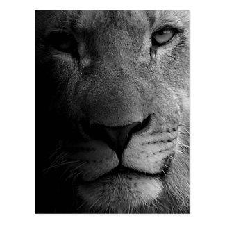 Retrato de motivación blanco negro del león de la tarjeta postal