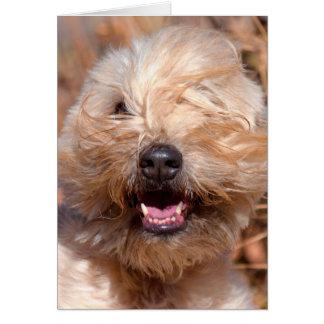 Retrato de trigo suavemente revestido de Terrier Tarjeta De Felicitación