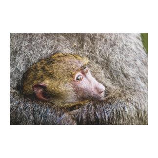 Retrato de un babuino verde oliva del bebé (Papio Impresión En Tela