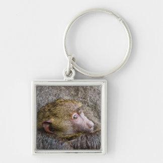 Retrato de un babuino verde oliva del bebé (Papio Llavero Cuadrado Plateado