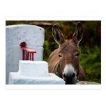 Retrato de un burro en Irlanda Tarjetas Postales