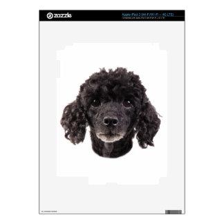Retrato de un caniche negro iPad 3 skins