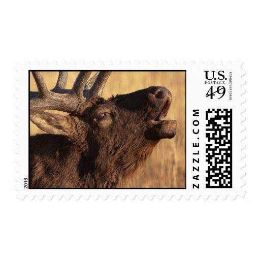 Retrato de un clarín sello